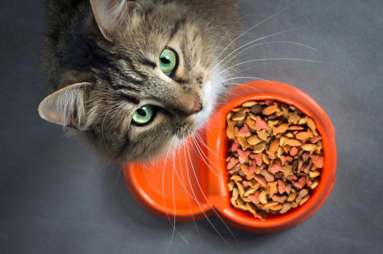 Kat met één eiwitbron