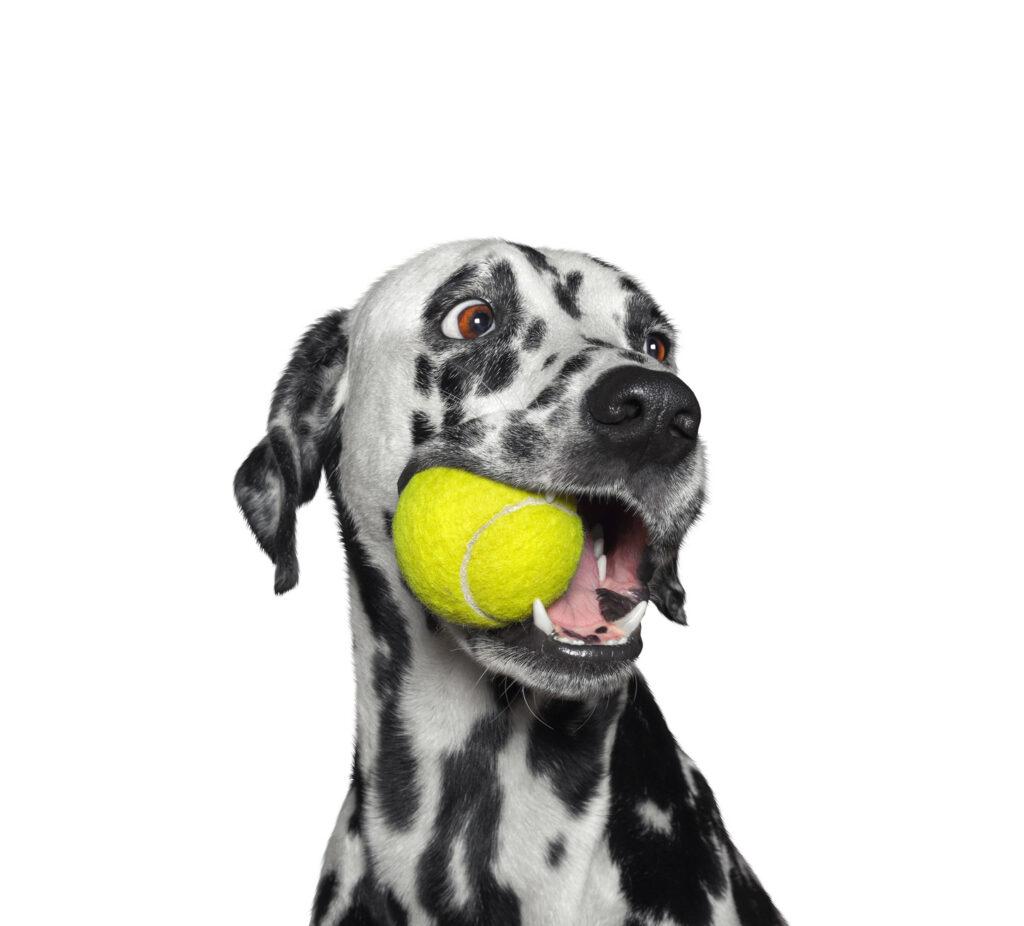 Hond met bal
