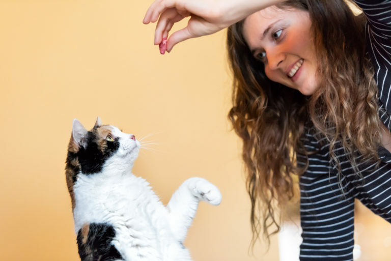 katten trucjes aanleren