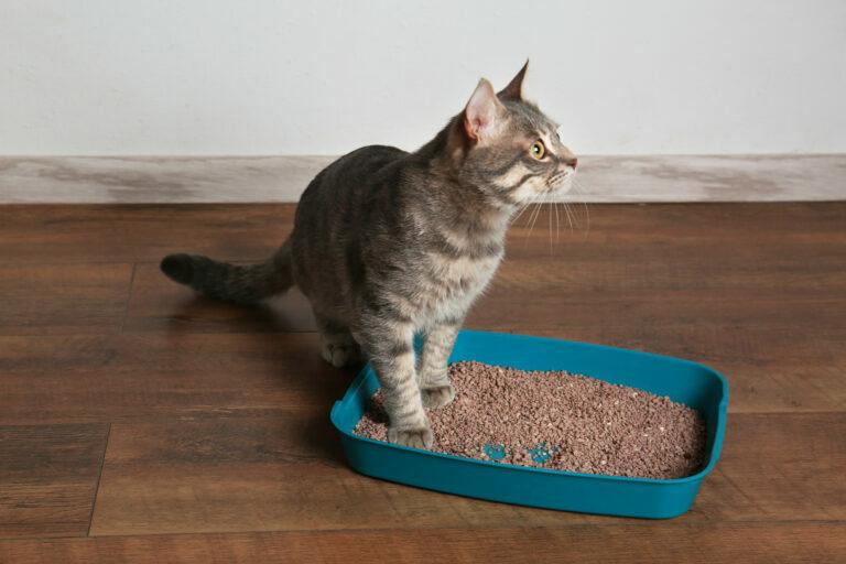 Kat in kattenbakken
