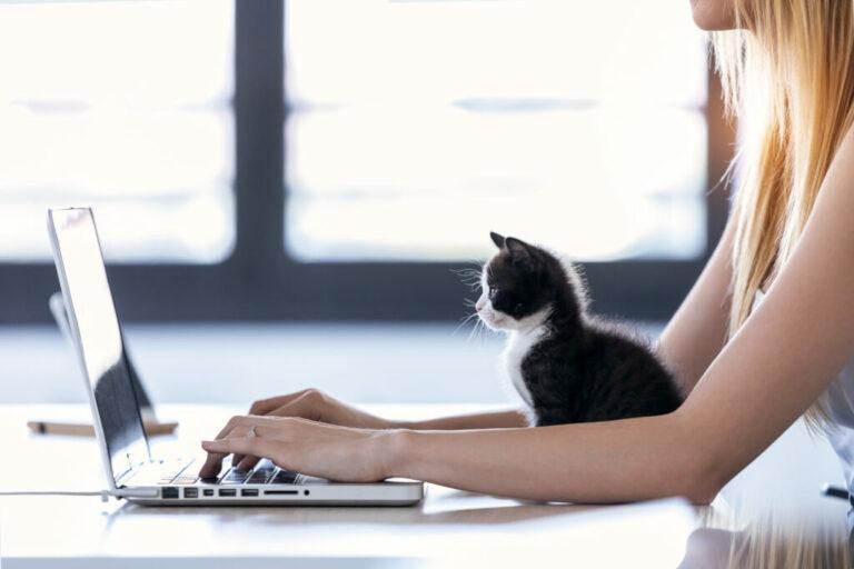 kat met laptop