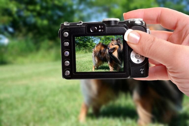 tips voor perfecte hondenfoto's