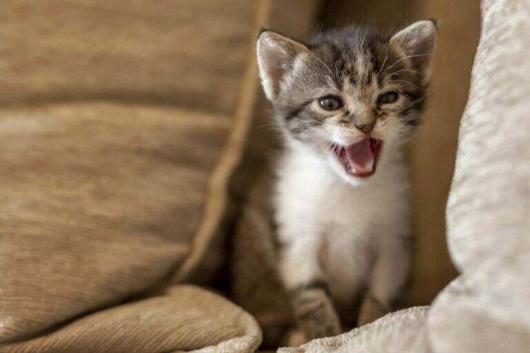 kitten op bank