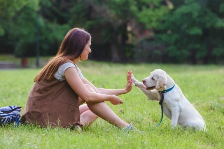 Uitlaten van je hond