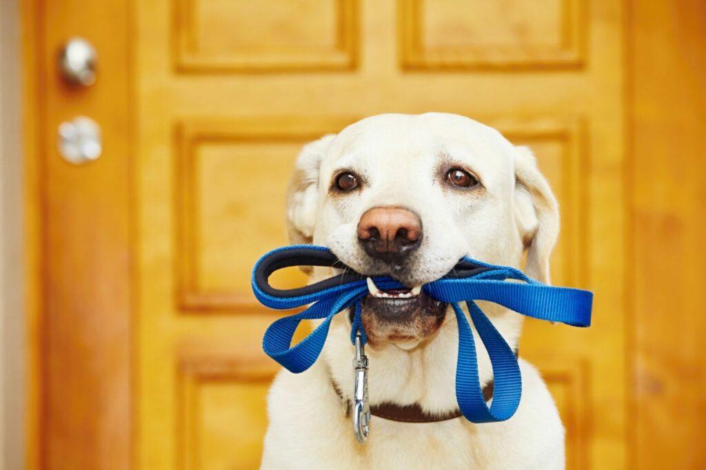 Hond heeft lijn in mond uitlaten