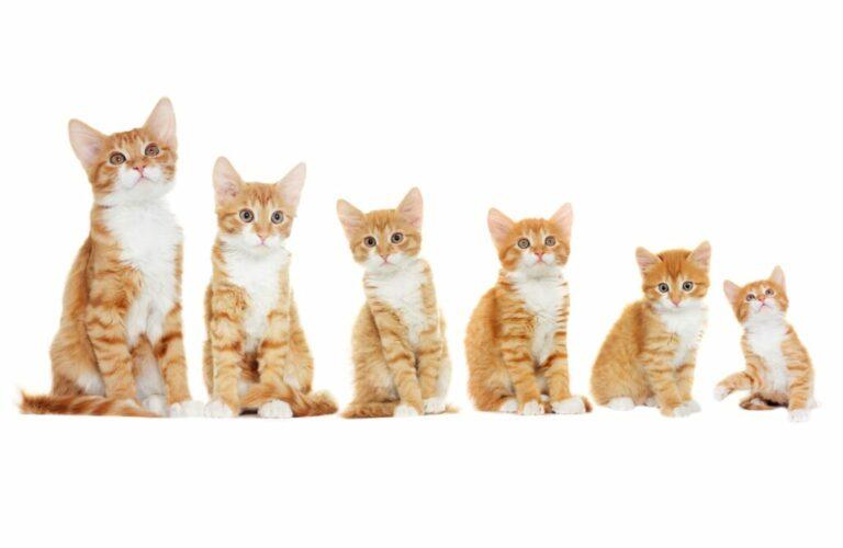 groei van katten