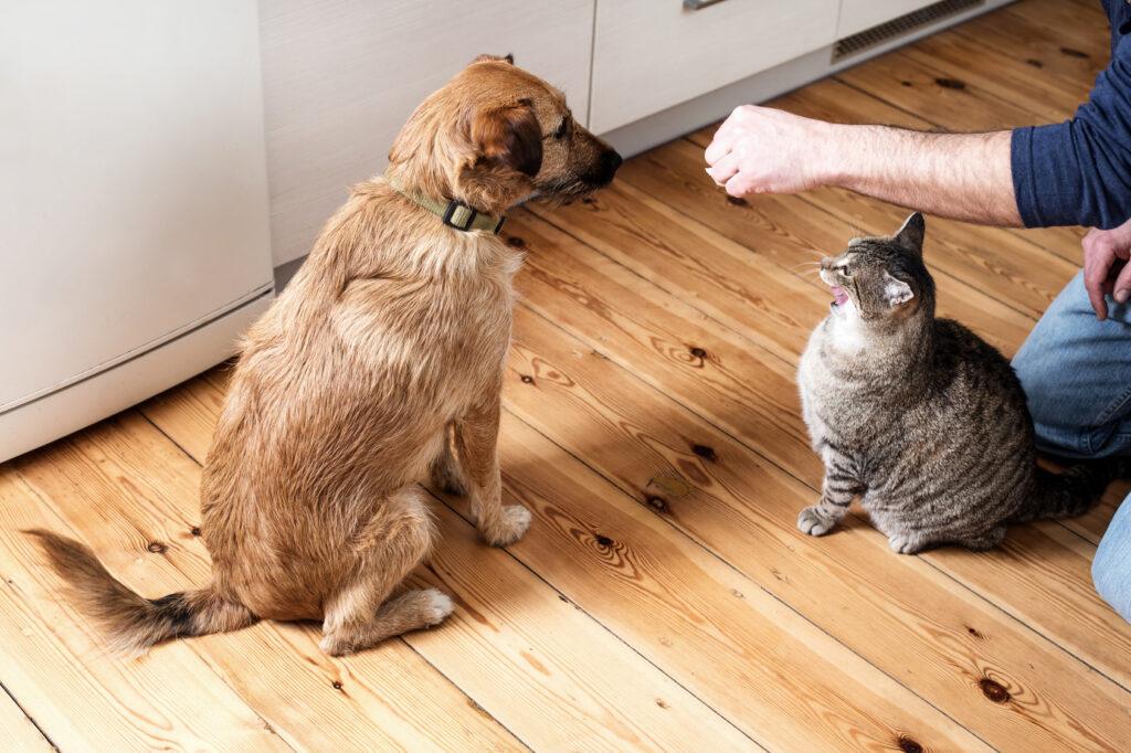 hond kat voer