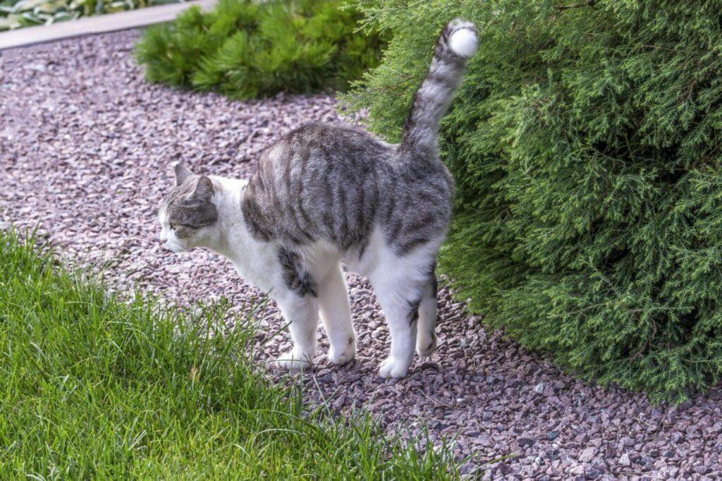 Kat markeert bosje