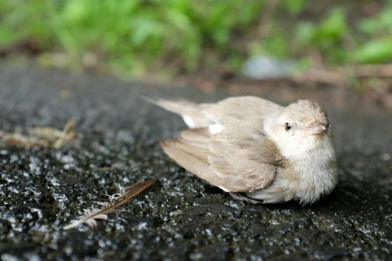 Gewonde vogel