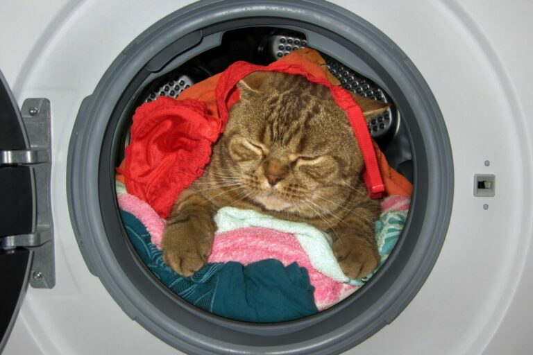 Kat in wasmachine