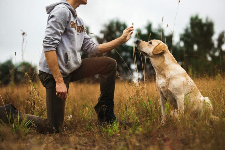 Anti-jachttraining voor honden