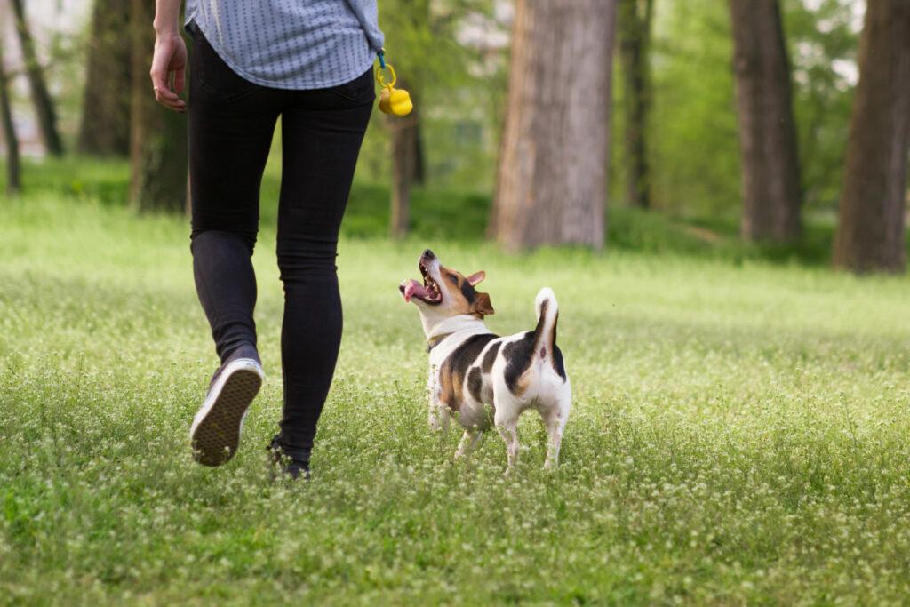 Hond speelt in gras