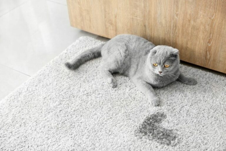 geur van kattenurine verwijderen tapijt
