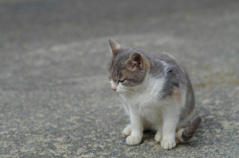 Kat op straat