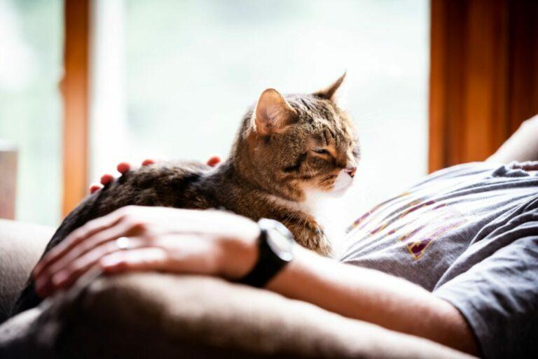 Kat op schoot