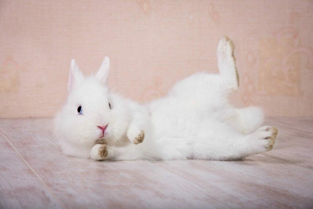 Liggend konijn