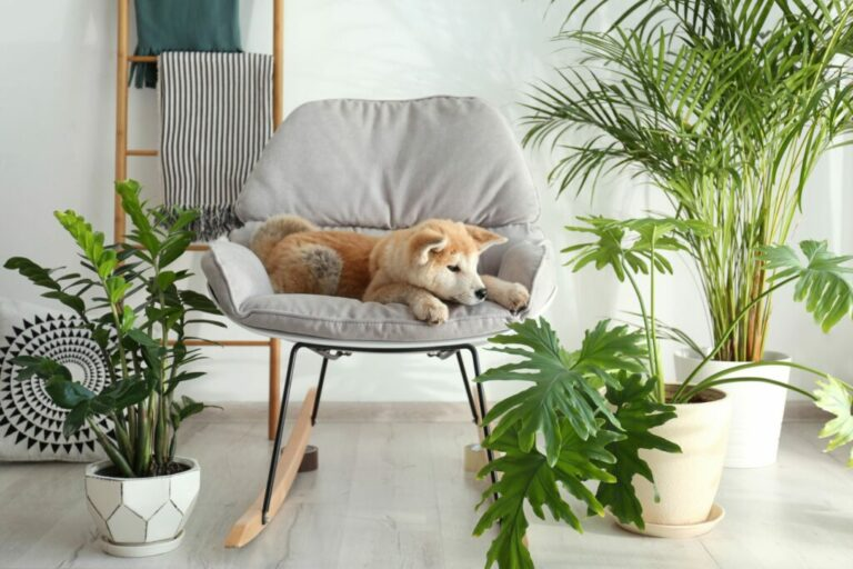 Giftige planten hond