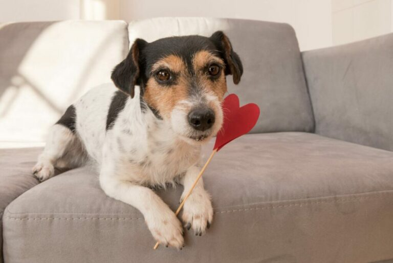 Hond met hart
