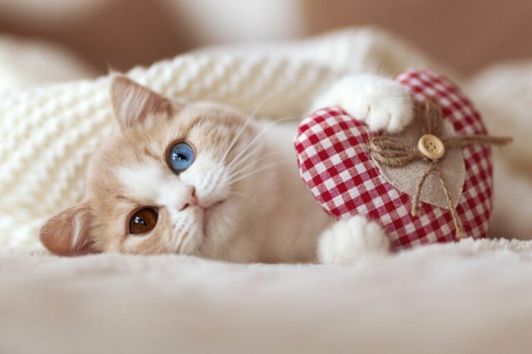 Kat met hart