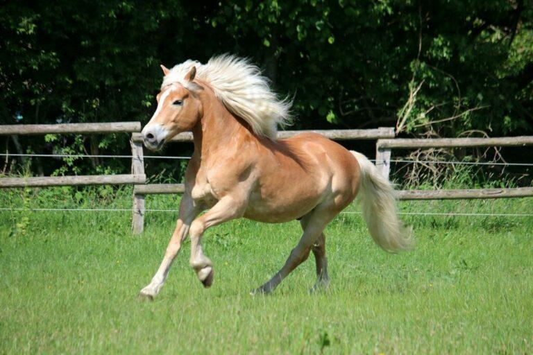 bruine pony rent in wei