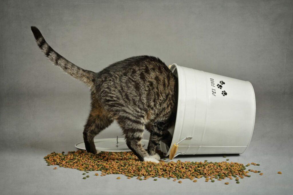 kat droogvoer