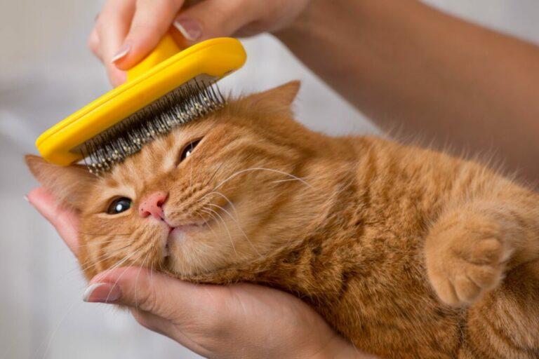 kat wordt geborsteld
