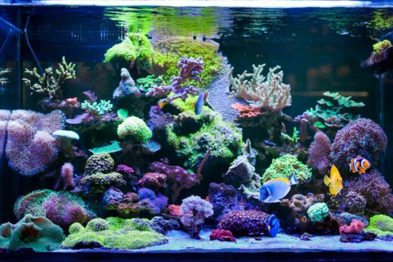 kleurrijk aquarium veel vissen