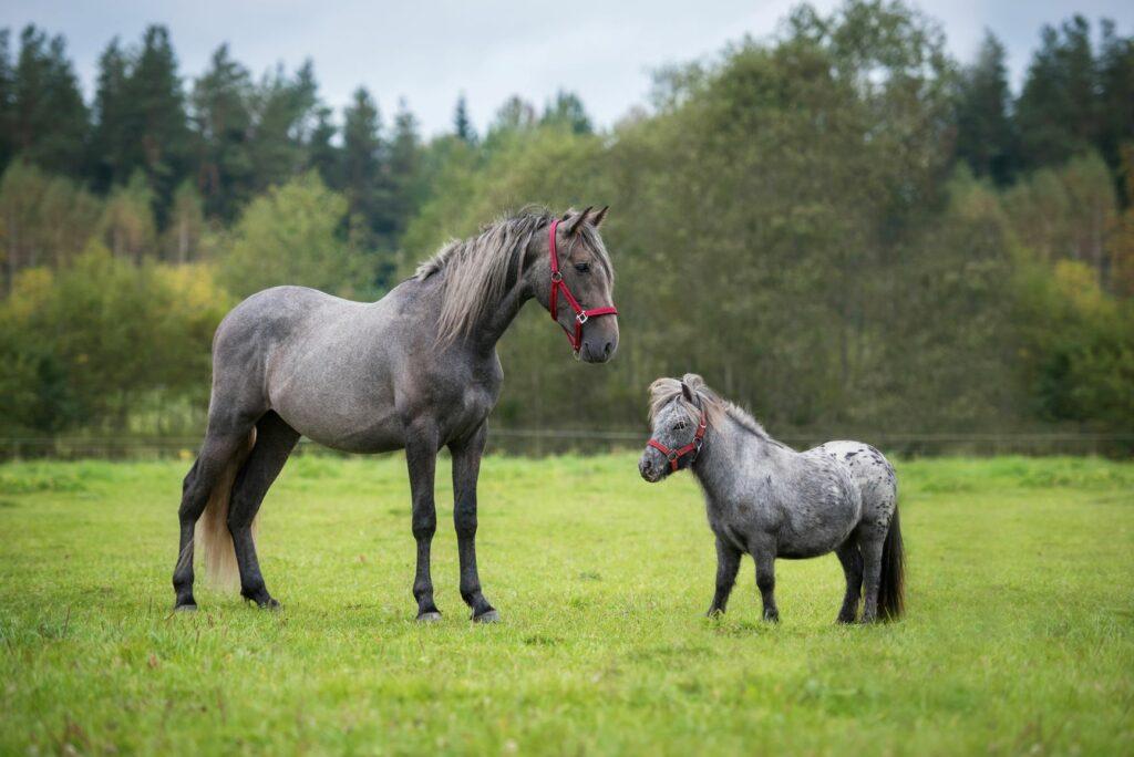 pony en groot paard