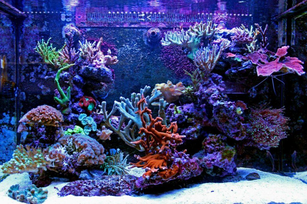 Zoutwateraquarium koraal