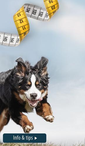 Overgewicht 2021 Hond_R