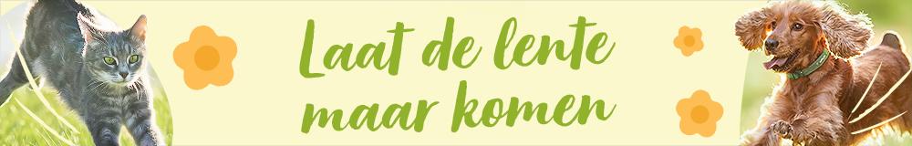 Spring Gen 2021 NL 1