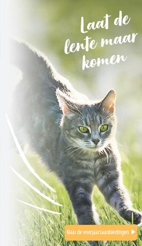 Spring Cat 2021 NL L