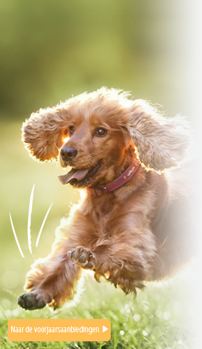 Spring Dog 2021 NL R