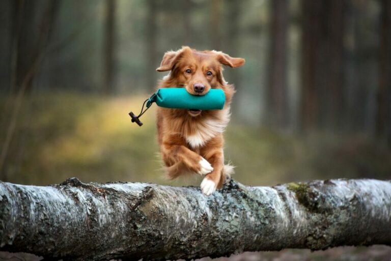 hond apporteert voerzak