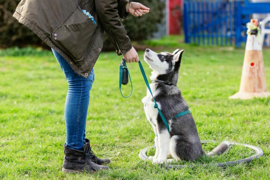 hond bij hondenschool