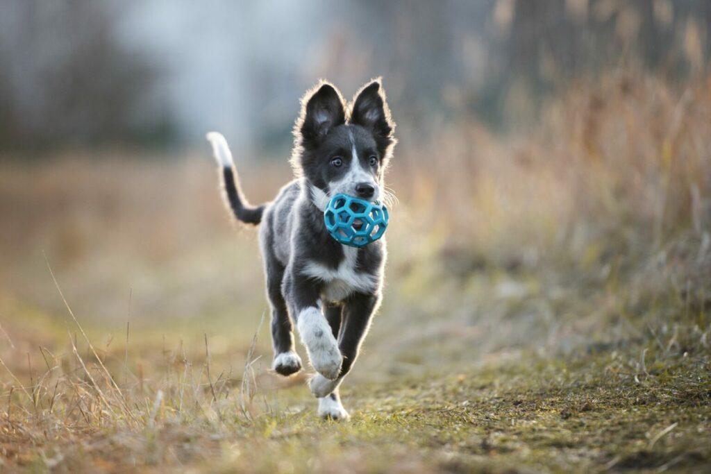 Hond speelgoed veld