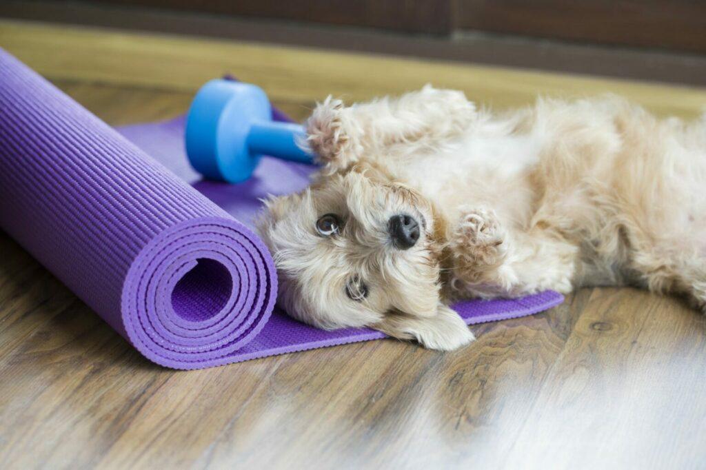 hond ligt op fitnessmat