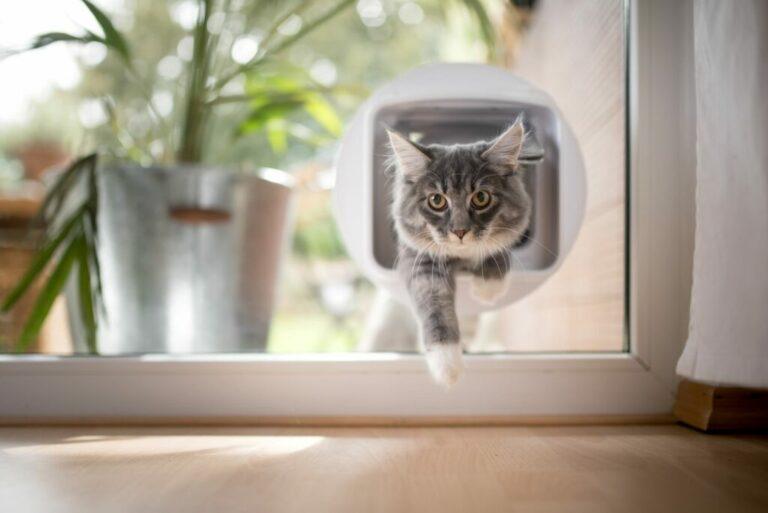 kat gaat door kattenluik in glas