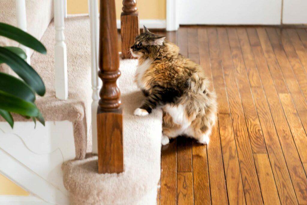 kat gaat trap op