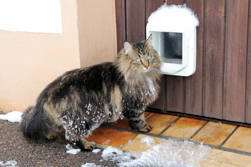 kat in winter voor kattenluik