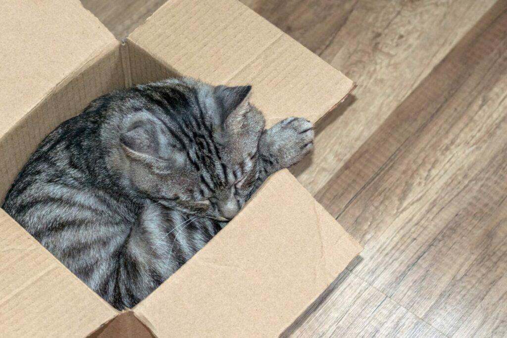 Kat slaapt in doos