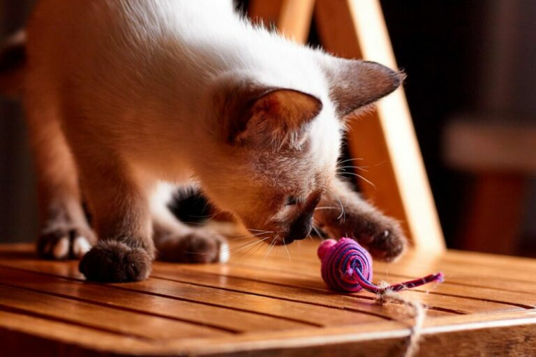 kat speelt met speelgoedmuis