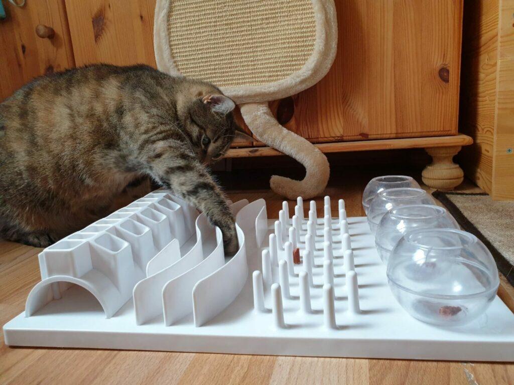 kat verdient snoepjes door sport