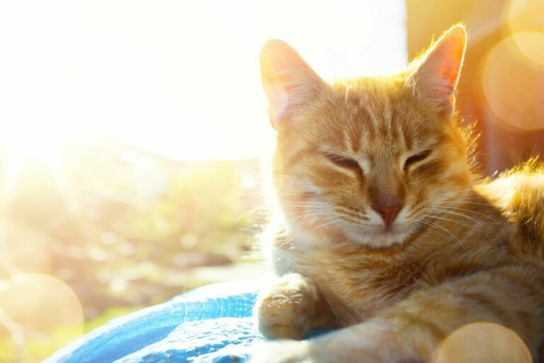 Kat ligt in de zon
