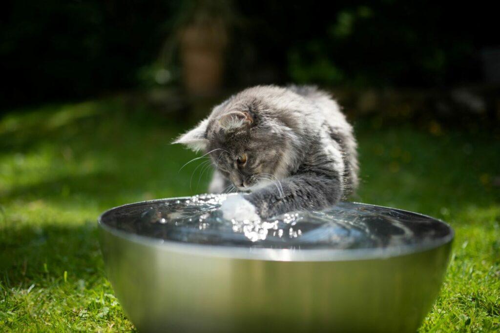 Kat speelt met water