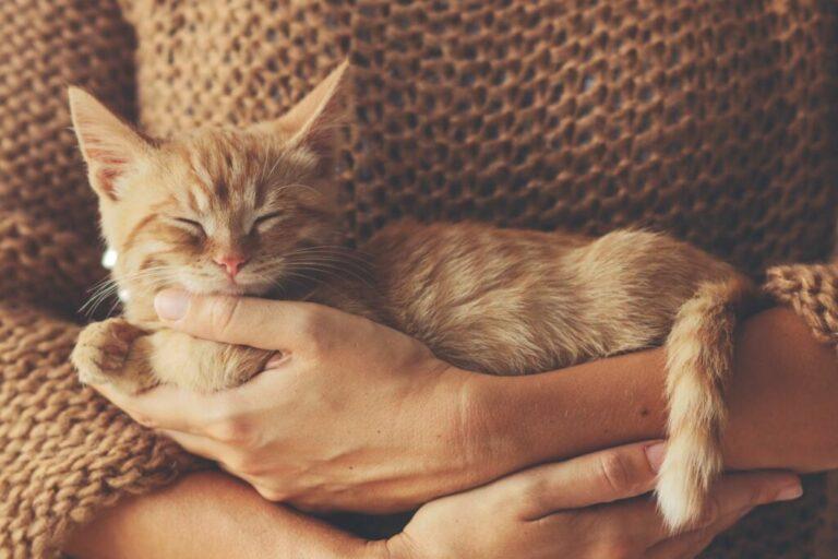 Vrouw houdt rode kitten op arm