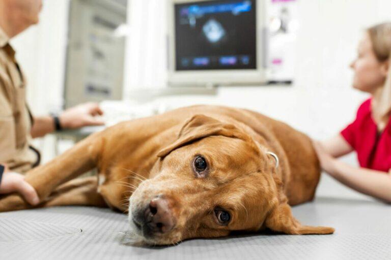 hond behandeling dierenarts