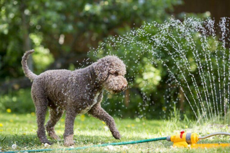 hond tuin sproeier
