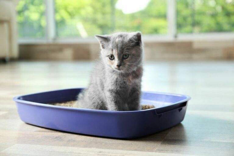 kitten in kattenbak met kattenbakvulling