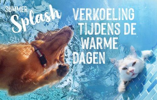 SummerSplash NL21 P1